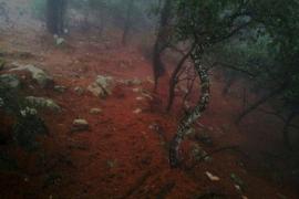 bosque de Escorca