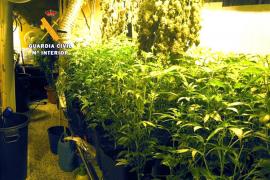 Desmantelado un laboratorio de marihuana en s'Arenal