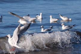 Danzando sobre las olas