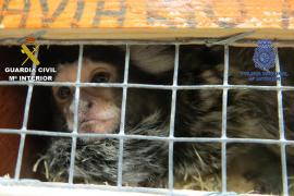 Recuperados varios ejemplares en una operación contra el robo de animales exóticos