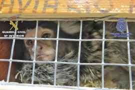 Cuatro detenidos por robar animales exóticos en un zoológico de Santa Eugènia