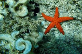Fondo marino con estrella de mar