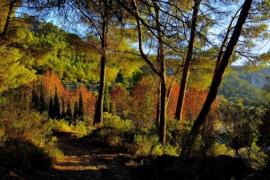 otoño en vall d'argent