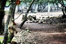 bosque de valldemossa
