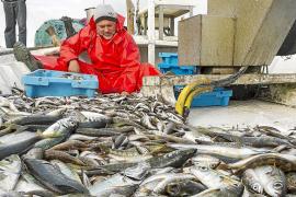 La producción pesquera creció un 5,2% en 2013 con 3.520 toneladas de capturas