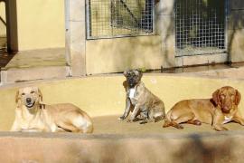 Un estudio ambiental revela que Felanitx recoge 50 toneladas mensuales de excrementos de perro