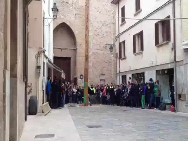 El Pi de Sant Antoni de Pollença ha sido cortado este Miércoles de Ceniza