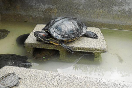 El Consorci de Recuperació de la Fauna cumple 10 años protegiendo la biodiversidad