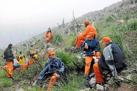 Un centenar de 'canviadors' participa en la reforestación de la Serra de Tramuntana