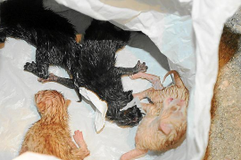 Abandonos masivos de animales en la Isla