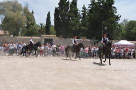 La muestra de caballos contó con gran público.