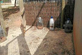 El Ajuntament de Marratxí y Baldea esterilizan a 101 gatos salvajes en cuatro meses