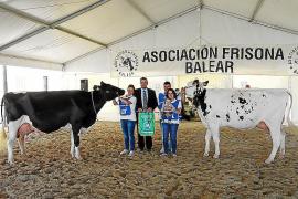 La vaca de Algendar repite como la mejor de Balears