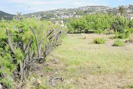 La limpieza de Can Fasser no tenía permiso del Govern y ha afectado a la flora de la zona