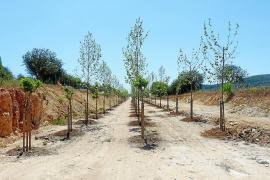 La vía verde de Manacor a Artà empieza a tomar forma y ya es utilizada por usuarios