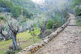 El Govern destina 137.320 euros en ayudas para los payeses de la Serra de Tramuntana