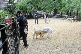 Calvià creará nueve parques caninos en 9.585 metros de suelo público