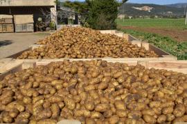 Unió de Pagesos reclama una campaña a favor de la patata local