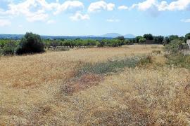 Santa Eugènia busca un solar para tener una Plaça Major como un pueblo al uso