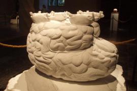 'Zeno Brains and Oracle Stones', de Jan Fabre