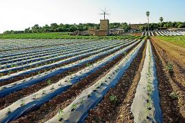 El texto final de la Ley Agraria clarifica que las competencias urbanísticas son del Consell