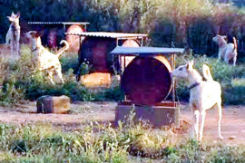La Guardia Civil inspecciona el solar donde nueve perros viven en bidones