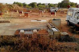 Desaparecen los podencos que vivían en bidones en Llucmajor