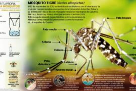 El mosquito tigre asienta su presencia en la Isla y se expande hacia Andratx y Llucmajor