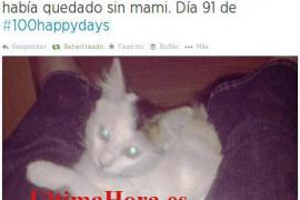 El SOIB publica por error un tweet de la adopción de un gatito