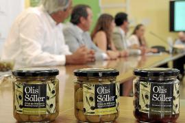 Primera campaña de la aceituna con denominación de origen de Mallorca