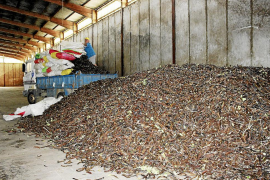 Comienza la recogida de la algarroba con unas previsiones de récord en producción