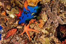 El GOB quiere promover el turismo de buceo conservando los fondos marinos protegidos