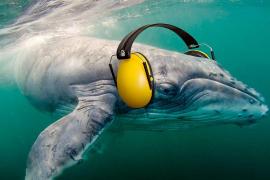 Ocean Care recoge 200.000 firmas contra las prospecciones petrolíferas