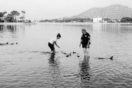 El aumento de delfines preocupa a los pescadores, que piden medidas disuasorias