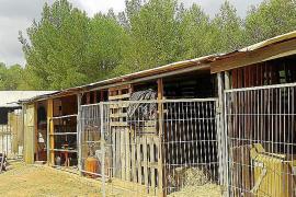 Cajas para ayudar a los caballos de Eivissa