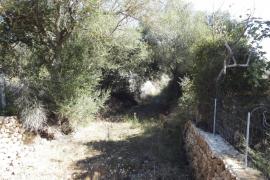 El Pleno prohibe el vertido de aguas residuales en el torrente de Solleric