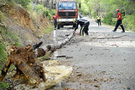 La caída de un pino causa retenciones en la carretera de Andratx a Estellencs