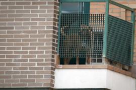 Excalibur, el perro de la infectada, seguía vivo y en casa alrededor de las 15.30 horas
