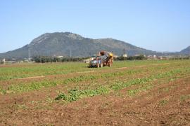 Efectos de la rebaja de la factura eléctrica en el campo mallorquín