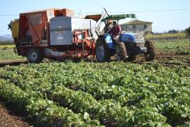 Unos 7.000 agricultores recibirán 10,6 millones del Govern