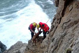 Los bomberos rescatan a un perro en un acantilado de Banyalbufar
