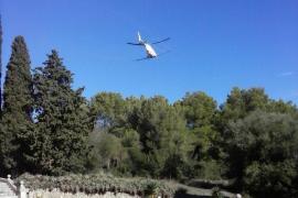 Gestores de huertos urbanos de Can Picafort piden alternativas a las fumigaciones aéreas menos agresivas
