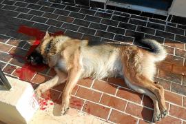Matan a un perro en Sóller con un disparo de escopeta