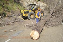 Desprendimientos constantes en la carretera Andratx -Estellencs