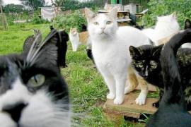 Cort potencia las colonias de gatos