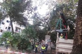 La intensa lluvia provoca la caída de la estatua de Antoni Maura de la plaça del Mercat