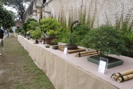 Condenado un transportista por la muerte de varios bonsáis en Llucmajor