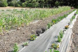 Los huertos urbanos y ecológicos llegan a la ciudad para dar sus frutos