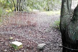 Pro Camins denuncia el cierre del Camí d'Ariant desde el Pi de Son Grua