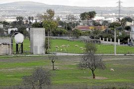 Perros sueltos matan a una docena de ovejas en Son Pons, en Palma